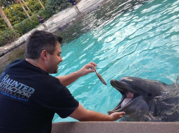 SeaWorld Orlando Ends Public Dolphin Feedings And Adds New Experience