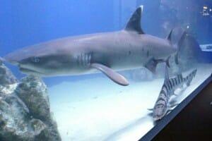 The Aquarium at Eastwood Mall – Niles Ohio