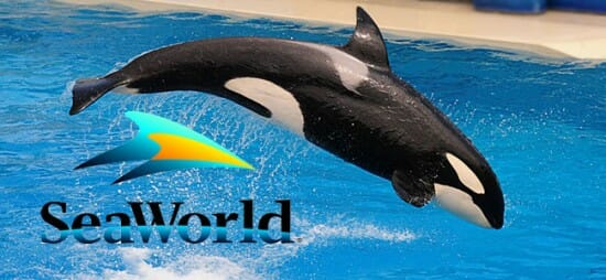 Sea World makes Major Announcements; ending Orca Breeding