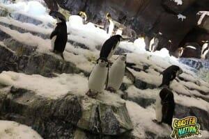 Penguins! A Visit To Antarctica at SeaWorld Orlando