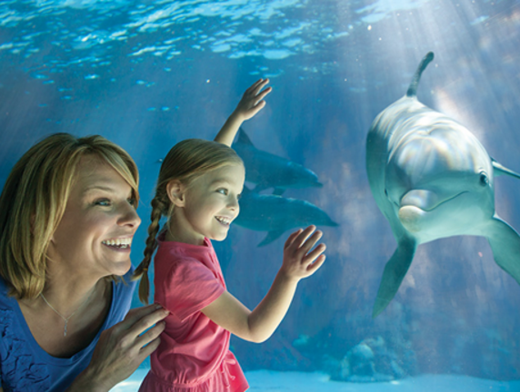 SeaWorld Provides Online Learning Resources for Students, Teachers and Parents