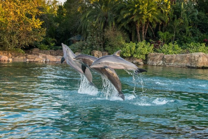 Discovery Cove Welcomes Florida Residents Back with Limited Time Offer