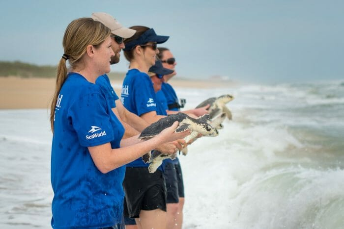 SeaWorld Orlando Returns Seventeen Rehabilitated Sea Turtles To The Atlantic Ocean