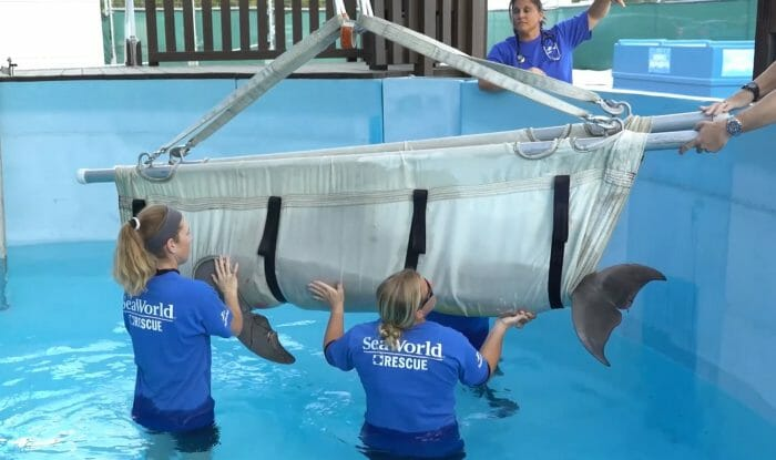 Dolphin Rescued By Sea World Orlando And Georgia Aquarium After Shark Attack