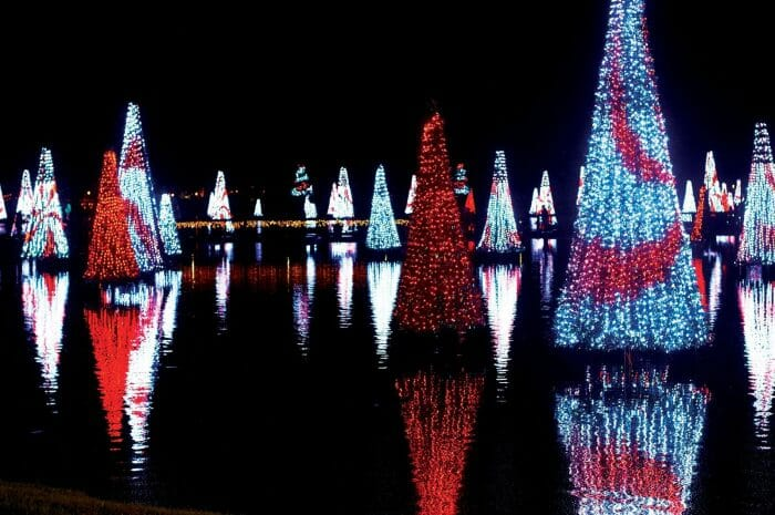 Seaworld's Christmas Celebration Returns With More Lights Than Ever Before
