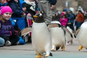 Penguins on Parade at the Pittsburgh Zoo & PPG Aquarium Returns for 2019