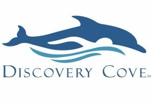 Shark Swim Reopens for an Ultra Exclusive Experience At Discovery Cove
