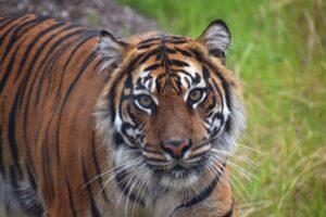 Wild Asia Opens at Akron Zoo